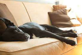 6 Ingenious Tips That ll Help You Keep Your Couch Pup Free BarkPost