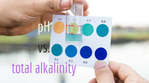 Total Alkalinity Vs Ph And Their Roles In Water Chemistry