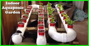 aquaponic gardening. build an indoor aquaponic garden gardening