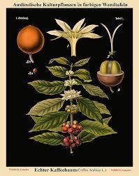 German Black Charts Amazon Com Wallbuddy Old Educational Chart German Botanical