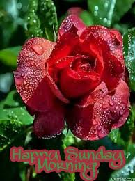 good morning sunday images with flowers pictures photos hd wallpaper free for whatsapp