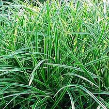 large plants large house plants safe for cats and dogs