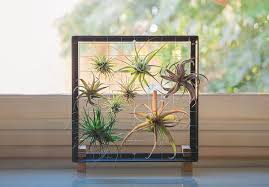 Get a frame and install wires on it to hang air plants. An incredible way  to house them.