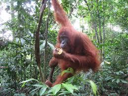 real jungle animals monkeys. Wonderful Animals AfricanJungleAnimals  Real Jungle Animals Pictures To Monkeys