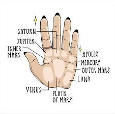 Palm Reading For Beginners A Guide To Reading Palm Lines