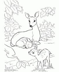 Small Picture coloring pages of deer BestAppsForKidscom