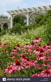 u s a massachusetts boylston tower hill botanic garden arbor coneflowers stock