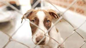Hayvanları Koruma Kanunu teklifi Meclis'te - Son dakika haberleri