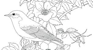 Blue Bird Coloring Pages P7144 Eastern Bluebird Coloring Page Blue
