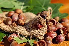 Types Of Acorns Chart How To Prepare And Cook Acorns The Old Farmers Almanac