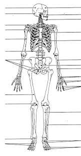 Labeled Human Skull Diagram Printable