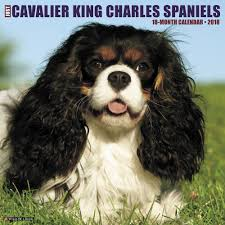 just cavalier king charles spaniels 2018 wall calendar calendars books gifts