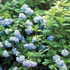 Shade Garden Plans  Smart Design Tips And Ideas For A Shaded GardenClimbing Plant For Shade