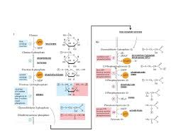 What Can You Do For My Life Glycolysis Life Through The Eyes Of