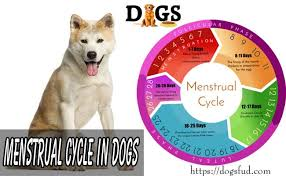 Female Dog Heat Cycle Chart Menstrual Cycle In Dogs Dogs Heat Cycle Complete Process