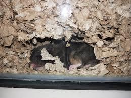 safe hamster bedding hamster society