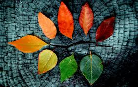 Other Autumn Tumblr Leafs Nature Fall ...