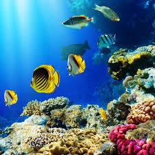 tropical fish and aquatic plants