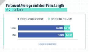 National average penis size
