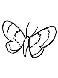 Lepidoptera Mot Kleurplaat Gratis Kleurplaten Printen