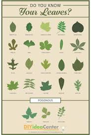 Identification Chart For Leaves Leaf Identification Guide Diyideacenter Com