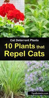 plants that repel cats
