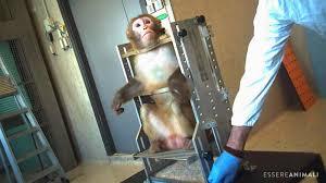 Che le scimmie non siano accecate, che vivano - Il richiamo ...