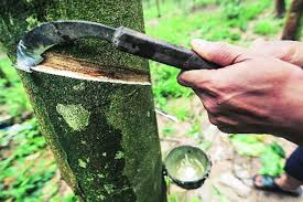Natural Rubber Bounces Back On Crude Oil Price Rise The