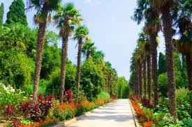 Одесский ботанический сад Одесса фото описание карта Никитский ботанический сад Никита