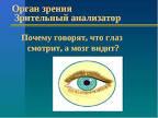 Почему говорят что глаза смотрят а мозг видит 138