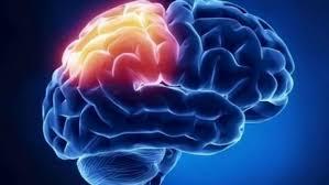 Un estudio del CSIC demuestra que el cerebro humano genera nuevas neuronas  hasta los 90 años