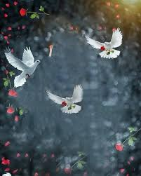 snapseed flying birds background free