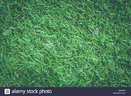 artificial grass texture. Top View Close Up Artificial Grass Or Green Texture In Vintage Style. T
