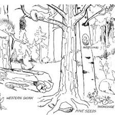 Small Picture Forest Coloring Pages With Animals Coloring Pages Detailed 793
