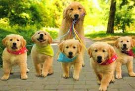 most beautiful puppies in the world. Most Beautiful Puppies In The World On