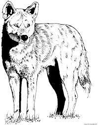 Small Picture coyote friend of wolf Coloring pages Printable