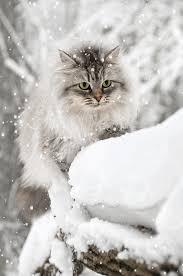 neige de février .... - fleur et amitié