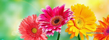 spring flowers light bokeh free facebook timeline profile cover nature