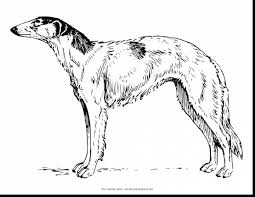 Small Picture Amazing dog breed coloring pages with coloring pages of dogs
