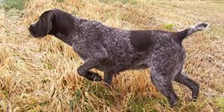 perfect hunting dog names 95 names for your best pal