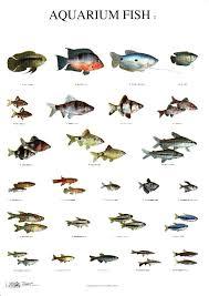 Fresh Water Aquarium Fish Species Caramenghitung Co
