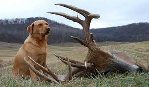 Dogs And Deer The Rise Of Blood Tracking Outdoorhub