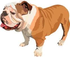 cute bulldog clipart.  Bulldog Bulldog Clipart Graduation Clip Art To Cute Clipart R
