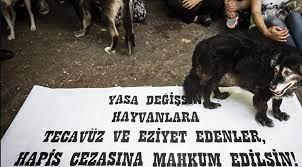 Hayvanları Koruma Kanunu' teklifindeki 'cinsel ilişki' ifadesine düzenleme  - Sputnik Türkiye