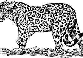 The page comes with coloring instructions. Jaguar Coloring Pages Coloring4free Com