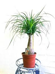 office plants no light. Plants That Need No Light Amazing Surprising Jubilee Office Furniture Small W