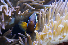 real underwater world. Modren World Shelter Nemo Aquarium Hide Exotic Hidden Protection Tentacles  Invertebrates Protect Animal World Aquatic Animals Symbiosis Underwater Inside Real Underwater World