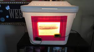 how to make a incubator for reptile eggs