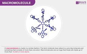 Biological Macromolecules Chart Macromolecules Types And Examples Of Macromolecules