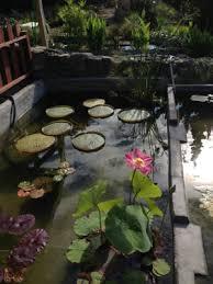van ness water gardens 22 photos 17